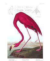 "John Audubon's Birds of America ""American Flamingo"" Archival Quality Art Print"