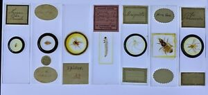 Seven Antique Microscope Slides of Insects etc