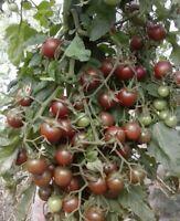 30 BLACK CHERRY TOMATO SEEDS 2020(non-gmo heirloom vegetable seeds!)