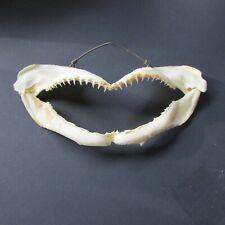 Real jaw taxidermy teeth fish marine