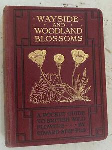 Vintage Book Wayside and Woodland Blossoms Edward Step Pocket Guide Illus