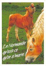 BT9200 horse cheval france en normanie qu est ce qu on s marre  animal animaux