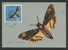 POLEN MK 1963 SCHMETTERLINGE BUTTERFLY MAXIMUMKARTE MAXIMUM CARD MC CM c9166