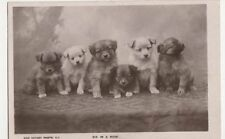 Dogs, Six In A Row, Rotary Real Photo Postcard, B359