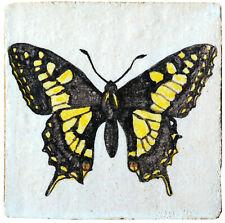 Farfalla Papilio glaucus (Linnaeus, 1758)  -  Swallowtail butterfly 11538