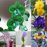 FJ- KF_ 50Pcs Phalaenopsis Seeds Flower Plant Home Office Garden Ornament Bonsai