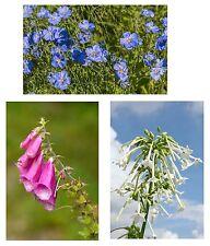 Samen-Spar-Set: drei ungewöhnliche Sorten: Staudenleine, Fingerhut und Dufttabak
