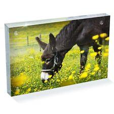 "Little Cute Donkey Horse Photo Block 6 x 4"" - Desk Office Art Gift #8259"