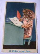 Cat Not Available Collectable Animal Postcards