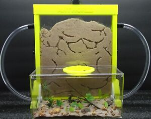 AntWorldUSA Vertical Sand Ant Farm with Habitat & Ants
