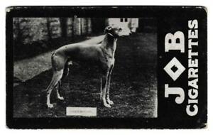Societe Job - 'Dogs' - Greyhound