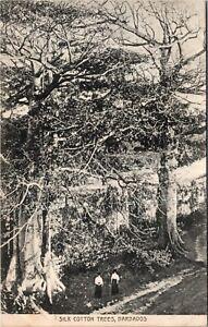 Postcard Barbados Ladies Walking under Silk Cotton Trees ~1910 M48