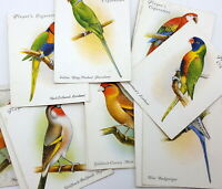 John Player & Sons cards Aviary & Cage birds. 1933. Variations.