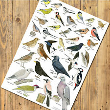 Two Colourful Parrots YFS0722 Art Print A4 A3 A2 A1