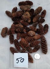 "SPRUCE ""Pine"" CONES Lot of 50, ~1-½ - 2-½"" inches. Decorations, crafts, Holiday"