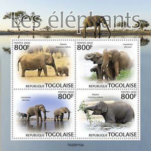 Togo Wild Animals Stamps 2020 MNH Elephants African Indian Elephant Fauna 4v M/S