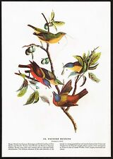 1930s Original Vintage Audubon Painted Bunting Bird Art Print