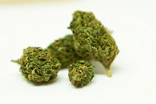 HARLEQUIN 100 g -Infiorescenze canap# - Light - greenhouse -top quality