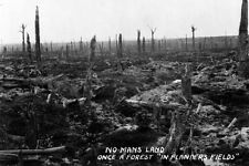 "New 5x7 World War I Photo: No Man's Land, Once a Forrest in ""Flander's Field"""