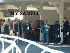 AMERICAN PHAROAH BELMONT STAKES TRIPLE CROWN HORSE RACE 8 x 10 PADDOCK PHOTO #2