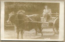 1939 PHOTO POSTCARD Woman In Oxcart - Happy Hollow AR