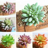 Mini Kunstpflanzen Sukkulenten Künstliche Pflanzen Kunst Steingarten Innendekor