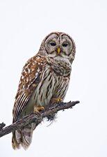 Enmarcado impresión-No Con Dibujo De Búho parado en una rama del árbol (imagen de arte cartel de los animales)