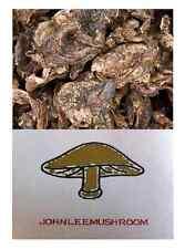 Sarcodon aspratus mushroom dried 310 grams