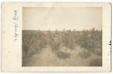 Burdock South Dakota SD (Fall River County) Fritz Becker Corn Field RPPC c.1907