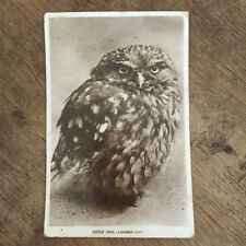 London Real Photographic (RP) Collectable Animal Postcards