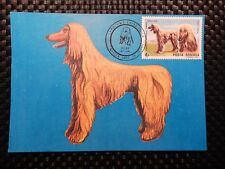 ROMANIA MK HUNDE DOGS WINDHUND AFGAN MAXIMUMKARTE CARTE MAXIMUM CARD MC CM a7569