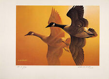 OHIO #8 1989  DUCK STAMP PRINT CANADA GOOSE CE EDITION 42 PRINTS TOTAL