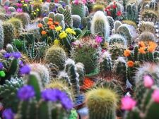 50 CACTUS MIX 'FINEST MIXED' Succulent Flower Seeds + Gift & Comb S/H