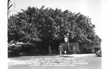 Rppc Banyan Tree Shell Gas Station West Palm Beach Florida Real Photo Postcard