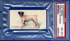 1890 N163 Goodwin & Co. Dogs of the World Fox Terrier Psa 8