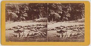 STEREOVIEW Photo CIVIL WAR  DEAD SOLDIERS GETTYSBURG BATTLEFIELD by W. H. TIPTON