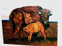 "Bison Mother Child VTG Auth Boutwell ""Prairie Madona"" TEXAS Signed Print Buffalo"