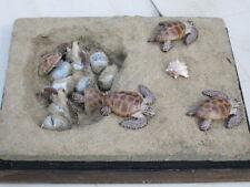 Taxidermie.Reconstitution  nid tortue de mer caouanne  taille réelle résine