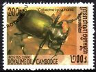 CAMBODIA BEETLES CLEARANCE ITEM