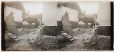 La ferme Vache chien Snapshot Photo Plaque de verre Stereo Vintage