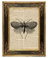 Moth #2 Art Print on Vintage Book Page Garden Insect Home Office Decor Gifts