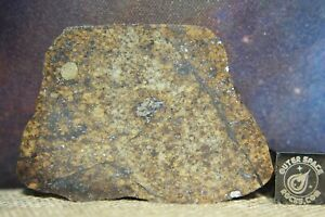 IMB NWA 13475 L5 Chondrite Melt Breccia Meteorite 17.2g full slice