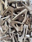 Forked Deer Antler Tips ( 2 pack) Raw Natural Antler **OREGON ANTLER WORKS**
