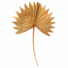 Palmenwedel, Palmwedel, Palmenzweige, Palmblätter, Palmenblätter, klein, Natur