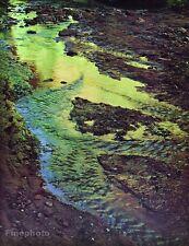 1962 Vintage 16x20 CANYON LANDSCAPE Utah Arizona Colorado River Art ELIOT PORTER