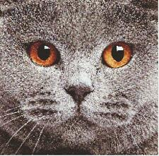 Chartreux Close Up Cat Crossstitch Pattern By Crossstitchmania