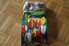20 Blumenzwiebeln Tulpen, Rembrandt Mischung   BZ 103