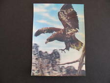 Bird Eagle 3D Japan older Postcard