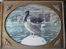 "ANTIQUE PELICAN PHOTOGRAPH W/BEAUTIFUL GOLD WOODEN FRAME, 23.5"" X 17.5""-IMAGE"