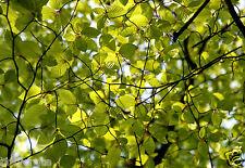 Photo Art décoration cadre déco - Enchevêtrement feuilles et branches Printemps